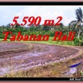 Exotic PROPERTY 5,590 m2 LAND FOR SALE IN Tabanan Selemadeg TJTB257