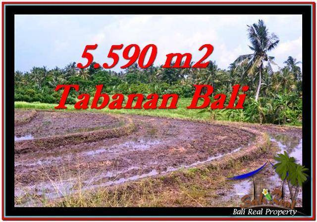 Affordable Tabanan Selemadeg BALI LAND FOR SALE TJTB257