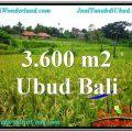 Beautiful PROPERTY UBUD LAND FOR SALE TJUB566